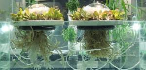 aquaponie france barge meduse (14)