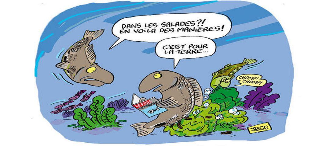 L 39 aquaponie a peut rapporter gros aquaponie france - L eau du robinet c est pour les grenouilles ...