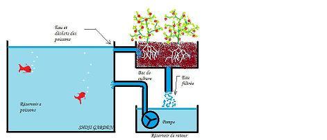 principe-aquaponie