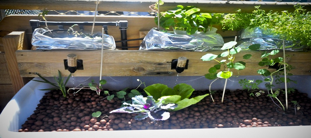 comment fabriquer un syst me aquaponique avec un baril bleu aquaponie france. Black Bedroom Furniture Sets. Home Design Ideas