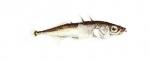Elever l'Epinoche (Gaestorosteus aculeatus) en aquaponie