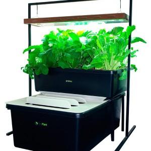 kit-aquaponie-fishplant-family-unit-600x600