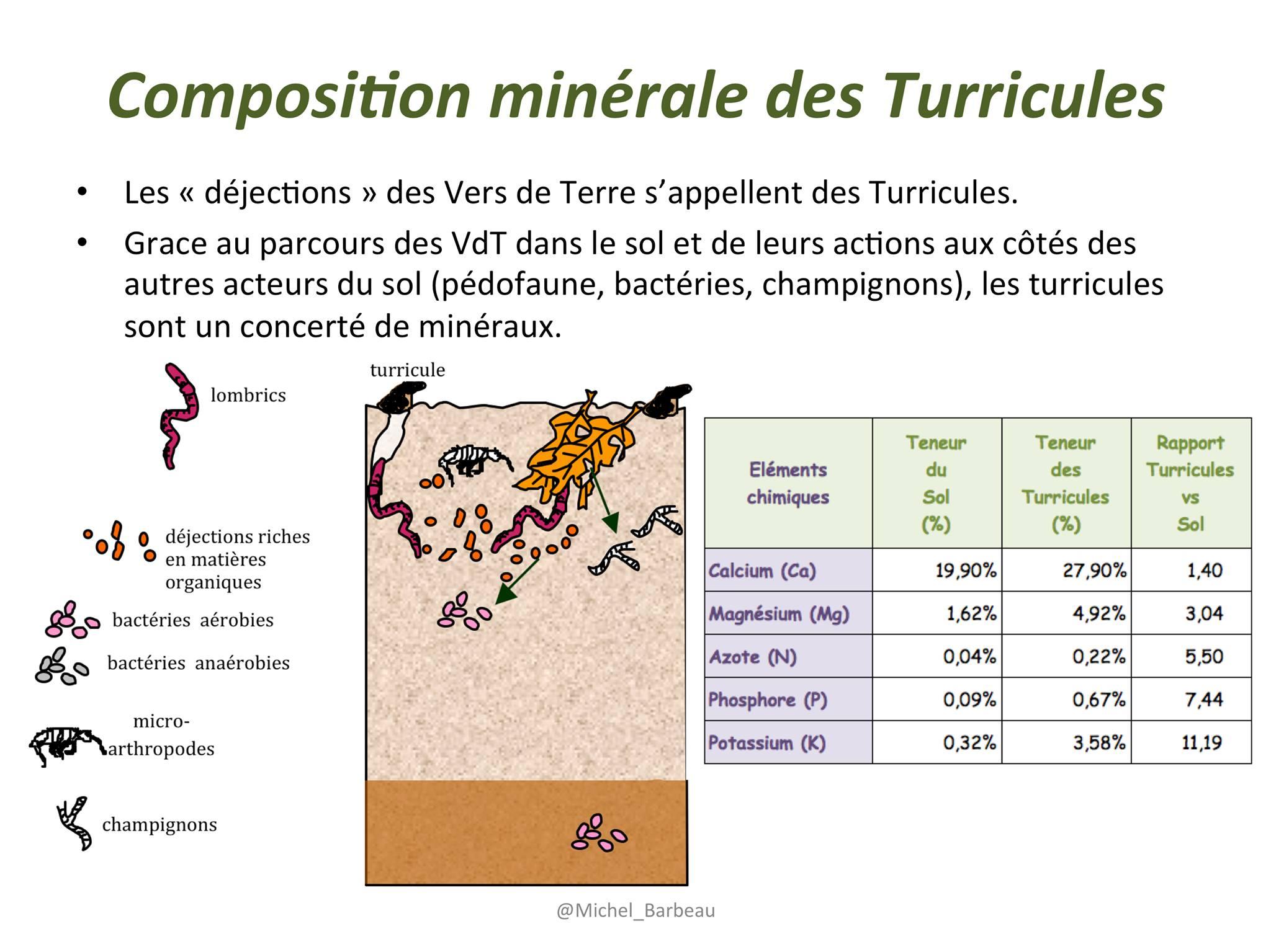 Composition minérale turicules
