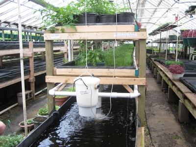 aquaponie plantes ecosysteme