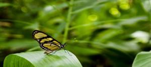 insectes ecosysteme aquaponique