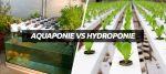 Hydroponie VS aquaponie