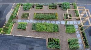 agriculture sur les toits