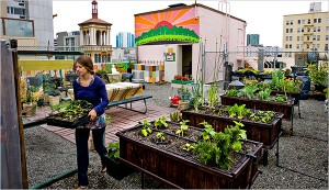 agriculture-urbaine-toit