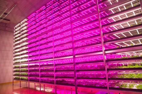 aquaponie indoor (7)