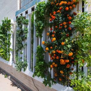 mur-fermier-pour-8-zipgrow-avec-colonnes-pour-culture-verticale-hydroponie
