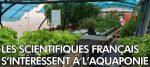 Les scientifiques Français s'intéressent à l'aquaponie